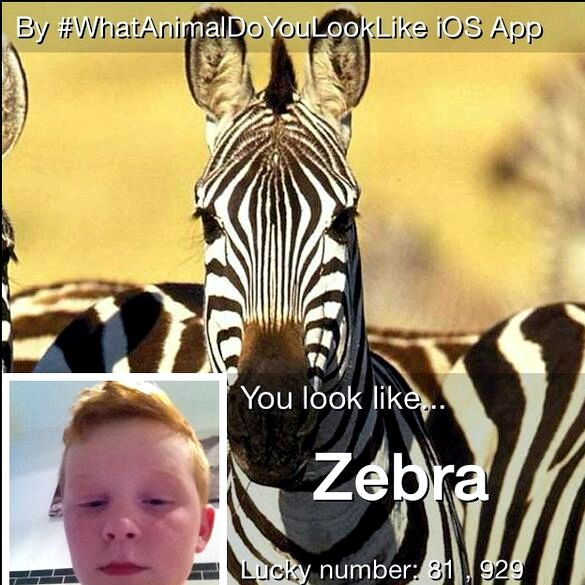 App que animal você se parece
